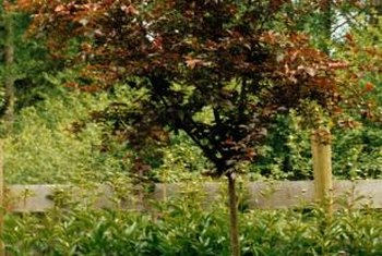 Research the estimated height and root system of trees before planting them.