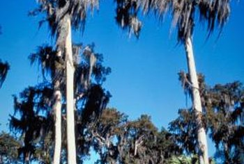 Rot-resistant cypress comes form the swamps of the southeastern Unites States.