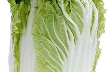 Napa cabbage develops a loose head of crisp leaves.