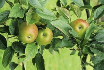 Several products are available to help you manage insects and diseases on your fruit trees.