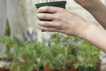 Use both small and large pots to fill your greenhouse with as many plants as you desire.