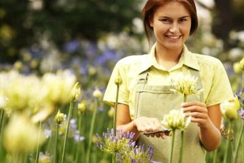 Fertilizer is crucial to growing abundant large flowers.