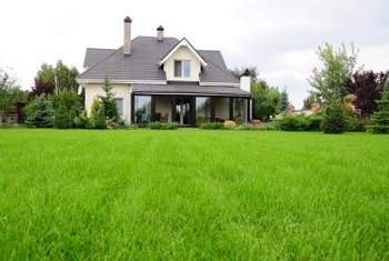 Talstar treats lawns infestested with insects like ticks, fleas, mole crickets and chinch bugs.