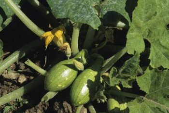 Both summer and winter squash prefer roughly the same pH.