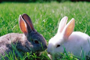 Rabbits dislike the smell of blood.