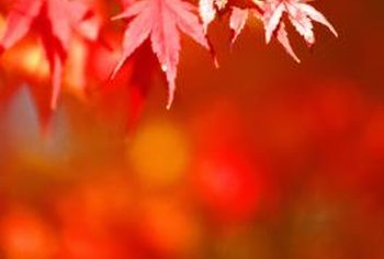 Red is a classic color for fall leaves.