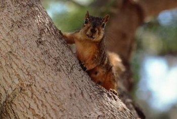 Squirrels don't care how much it costs you to replace your drip tubing.