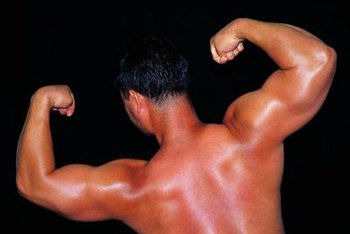 The upper arms include the triceps, biceps and shoulders.