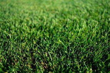 Healthy grass needs iron to maintain a rich, green color.