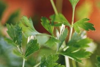 Grow parsley and add it to your favorite soups, salads and other dishes.