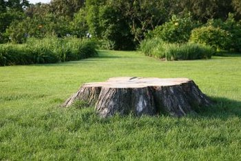 Tree stumps can mar the look of your lush lawn.