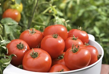 Prepare for a fruitful harvest with this hardy and delicious variety of tomato.