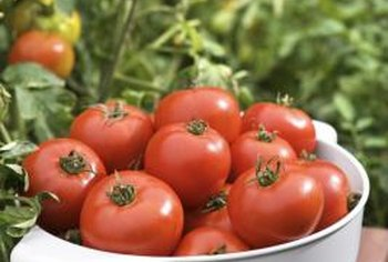 Proper plant care results in bright, healthy tomatoes.