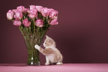 Place cut roses where your flower-loving kitty can't knock over the vase.