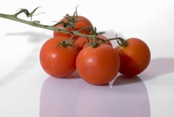 Tomato plants are usually classified as either determinate or indeterminate.