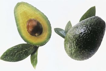 Avocado trees provide dense shade and buttery fruit.