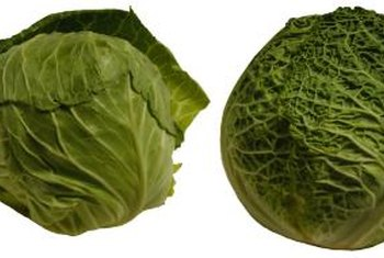 Depending on the variety, it can take anywhere from 60 to 90 days to grow cabbage.