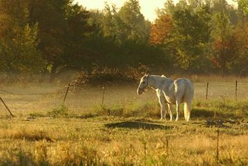 If you like animals, such as horses and cattle, use them to make an income off of your property.
