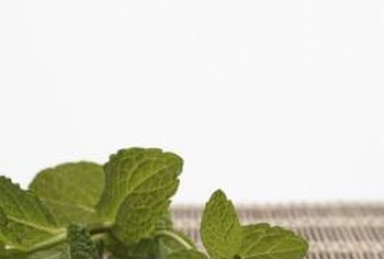 Mint has many culinary and medicinal uses.