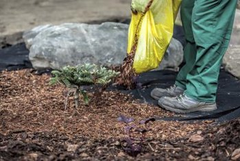 Placing a soaker hose underneath mulch in a flower bed helps conserve water more efficiently than placing it on top of the ground.