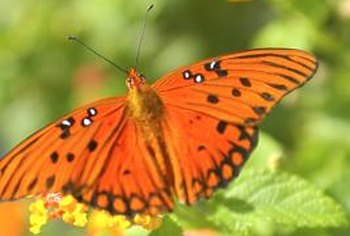 Attract butterflies to your backyard by choosing plants that appeal to them.