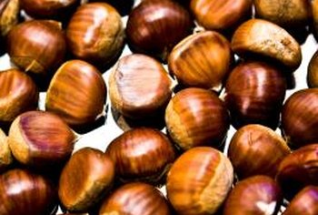 Chestnuts traditionally are roasted and eaten at Christmas.