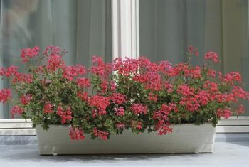 Self-watering planter boxes encourage prolific blooms by keeping soil constantly moist.