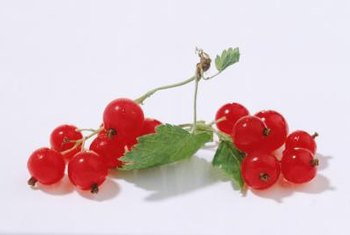 Sweet red currants are edible raw or cooked.