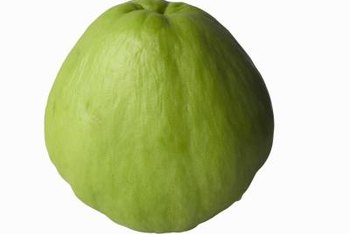 Chayote plants grown in sunlight produce lighter-colored fruit.