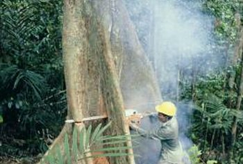 Carefully monitoring timber harvesting will help save forests.