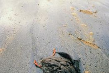 Oil spills are one source of water pollution.