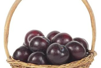 Plums are reliable and fast growing under the right conditions.
