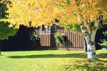 Shade trees not only protect people and plants from sun, but they also add to your yard's beauty.