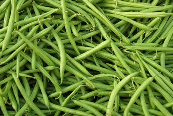Blue Lake green beans produce one heavy crop at once.