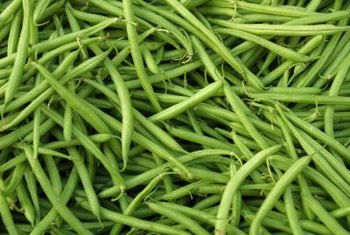 Pole beans require a trellis to support their vines.