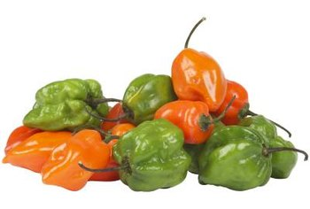 Habanero peppers are among the hottest peppers available in supermarkets.