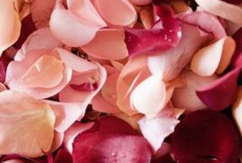 Rose petals are good for compost, but their plant's thorny stems aren't.