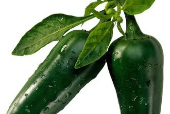 Use correct measures for the particular insect affecting your chili plant.