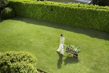 Hedges create a natural enclosure for privacy.