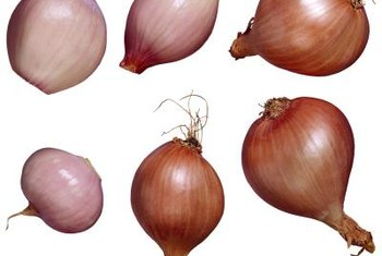 Ambition shallot bulbs are one of the teardrop shaped varieties.