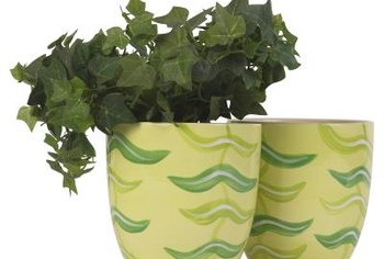 English ivy is one vine that grows well in containers.
