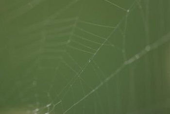 Webs are the calling cards of many spiders found on grapevines.