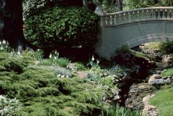 Backyard gullies transform unsightly wet areas and provide niches for growing a variety of plants.