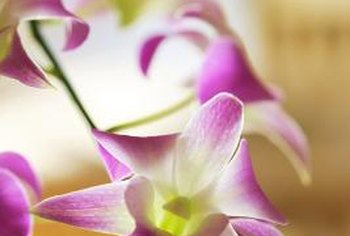 Orchids are often grown as houseplants because of their need for warmth and humidity.