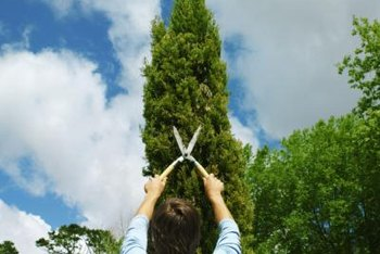 The easiest and safest way to remove arborvitae is to cut small sections of the trunk.