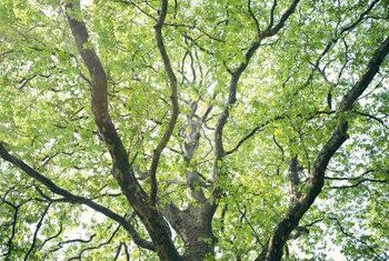 Trees with minor cracks or splitting don't require major repairs.