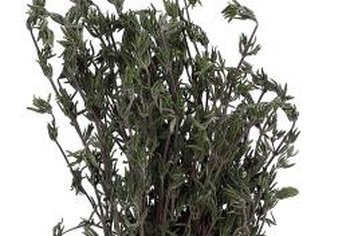 Hang your rosemary clippings upside down in a cool, dry place and store them in a glass jar for culinary use.