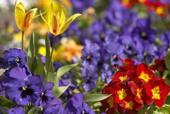 Fertilize your flower garden to encourage blooms.