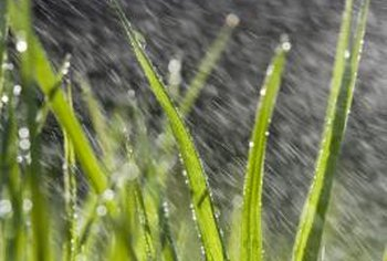 Overwatering is just as bad for grass as underwatering.