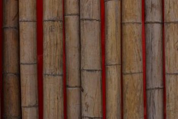 Bamboo stakes supply an attractive plant support.
